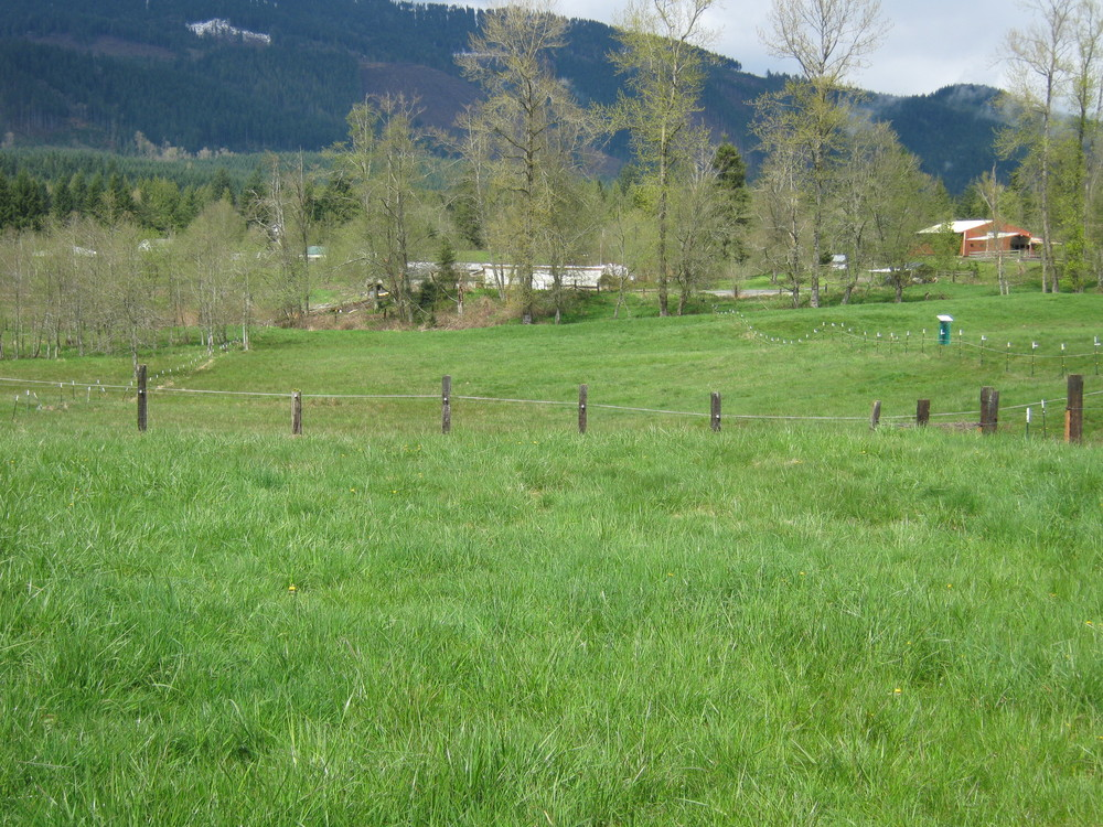 pasture with dog.png