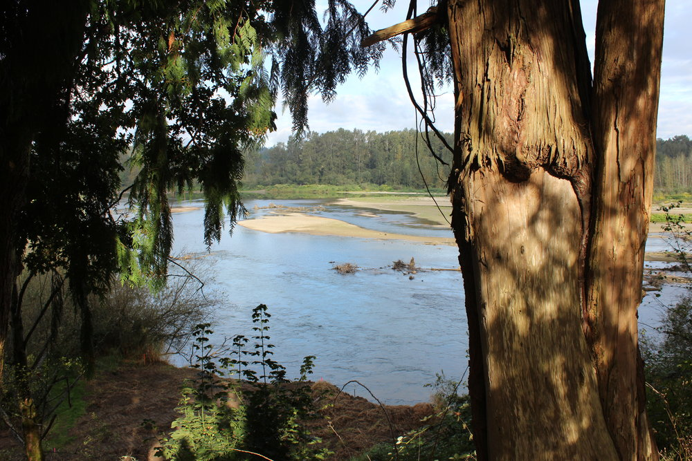 The Snohomish River as viewed from the hillside.