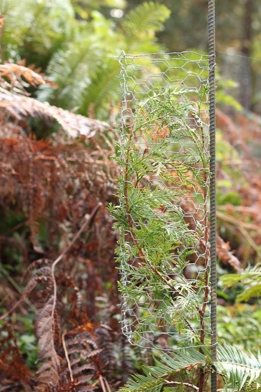 Duanes plant protectors.jpg