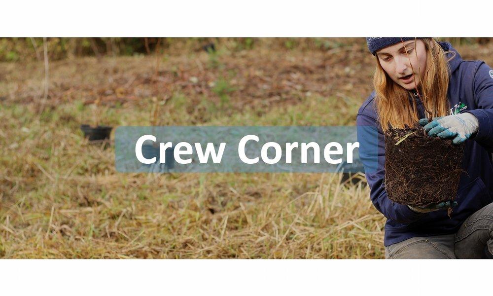 webtile-crew.jpg