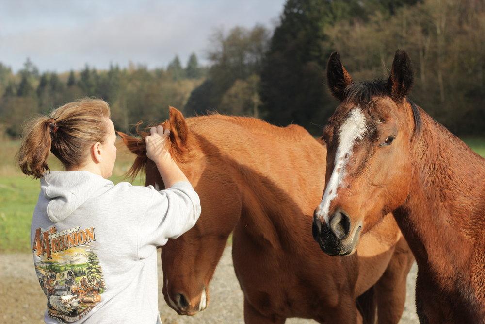 Sound Horsekeeping