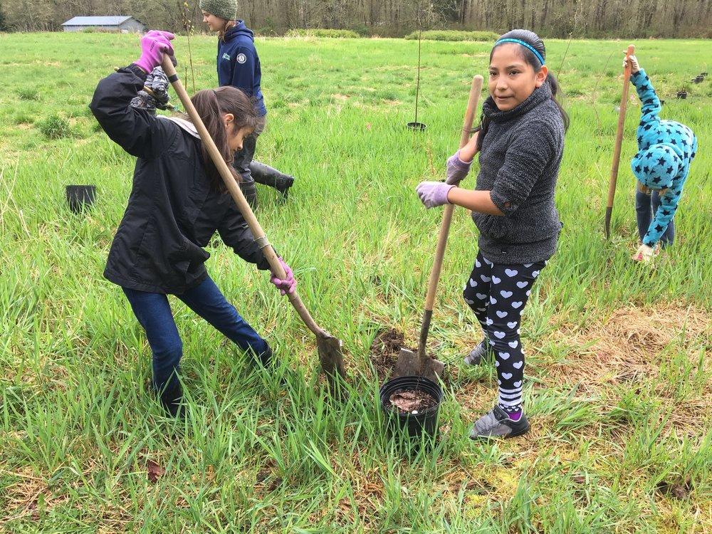Volunteer Restoration Planting