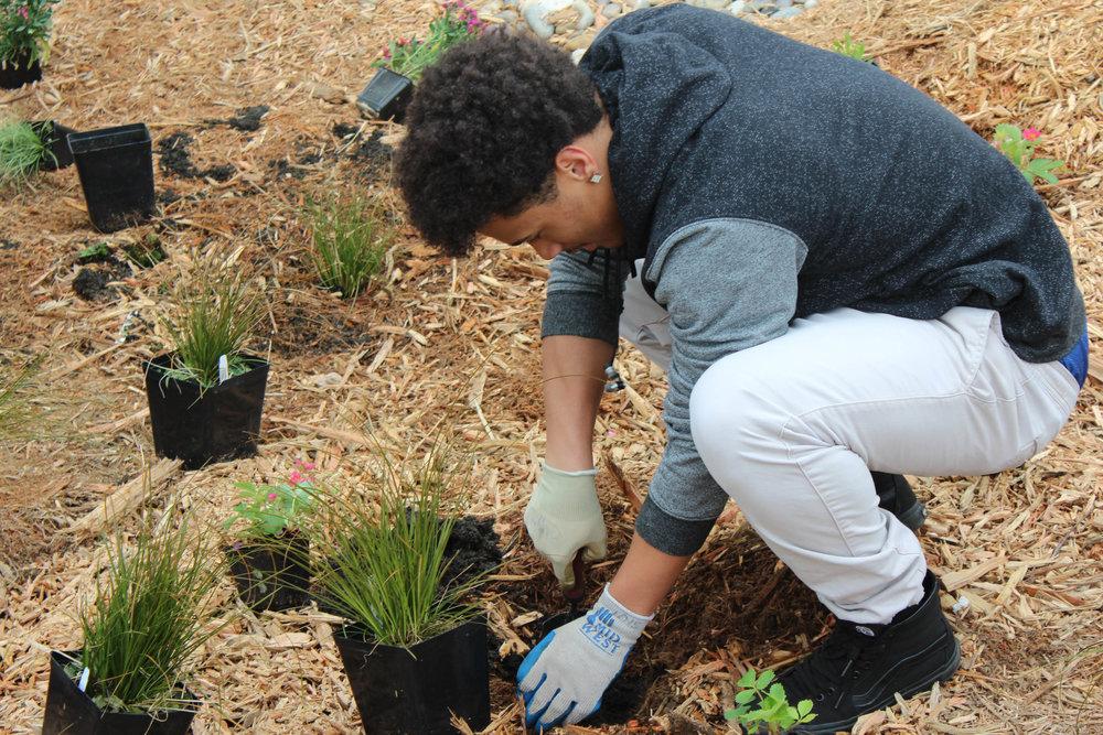 2017_0518_Cascade_HS_Rain_Garden_Planted_kq-4691.jpg