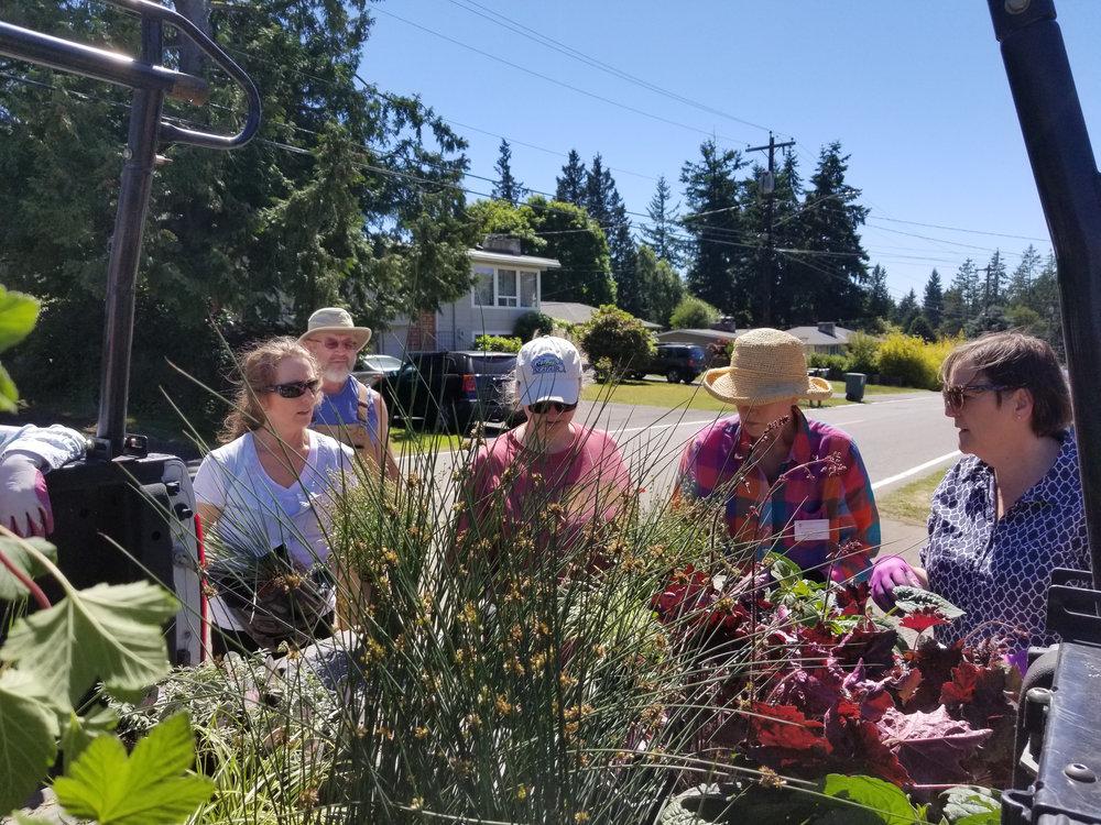 Lynnwood-WCC-Planting-152145-PLANT-OPTIONS.jpg