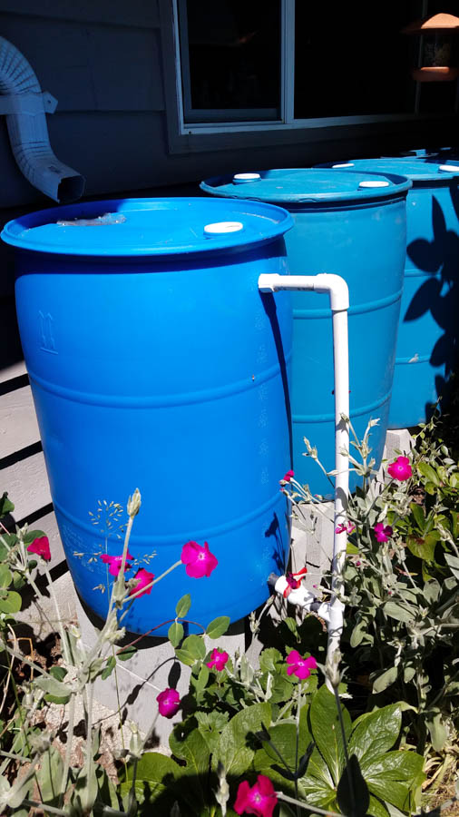 Rain barrels on cinder blocks with valve.