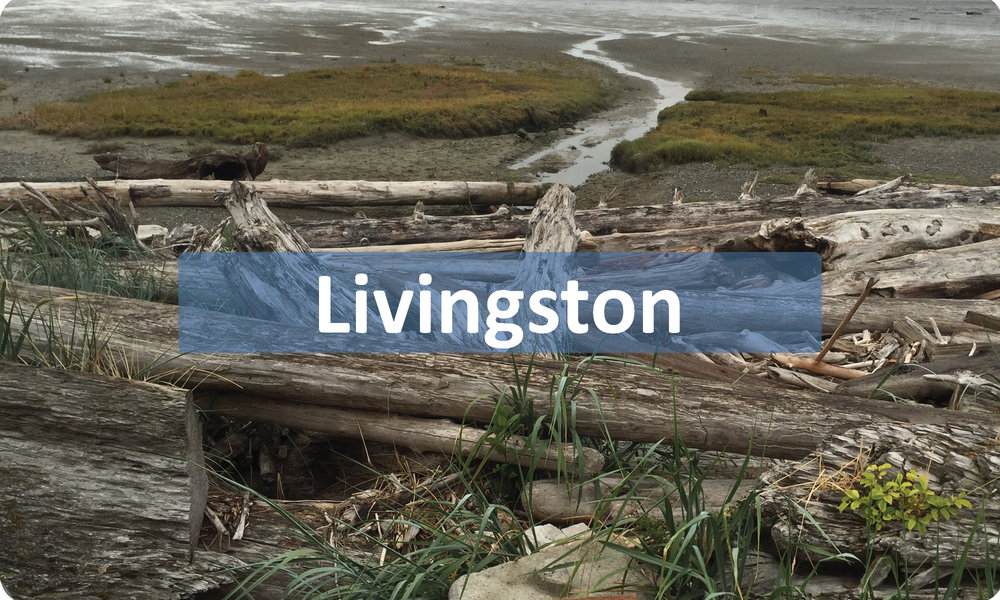 Livingston-Button.jpg