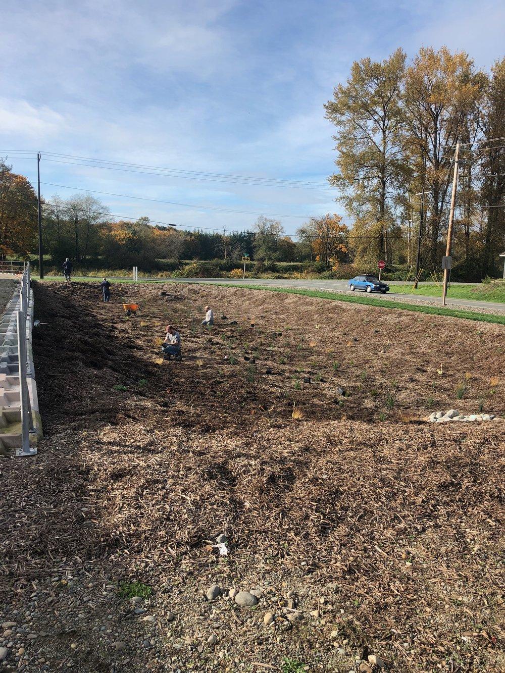 Our Vet Crew planting the huge rain garden