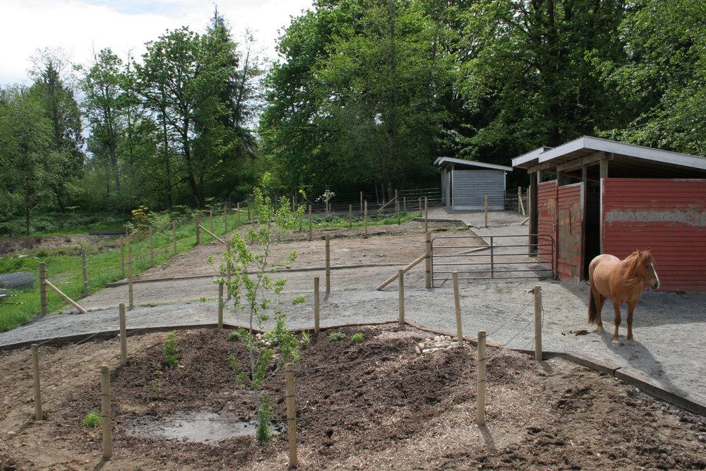 IMG_1061-horse-rain-garden.jpg