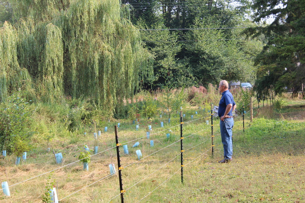 Bill Cayford looks out at his newly planted riparian buffer.