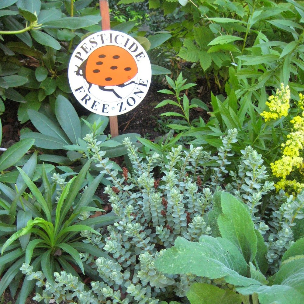 Photo of Pesticide Free Zone sign in garden.