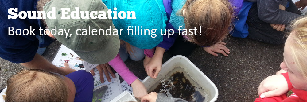 Students viewing macroinvertebrates. Text Sound Education: Book now, calendar is filling up. Link leads to education booking.