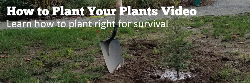 After the Plant Sale How To Planting Guide