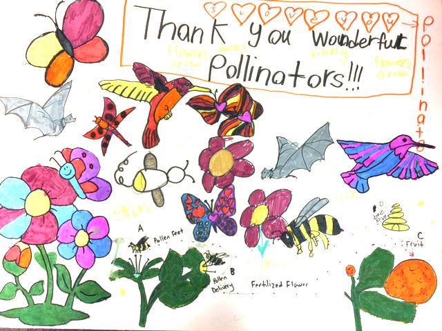 Thank-You-Pollinators-Sophia-Hradec-72.jpg