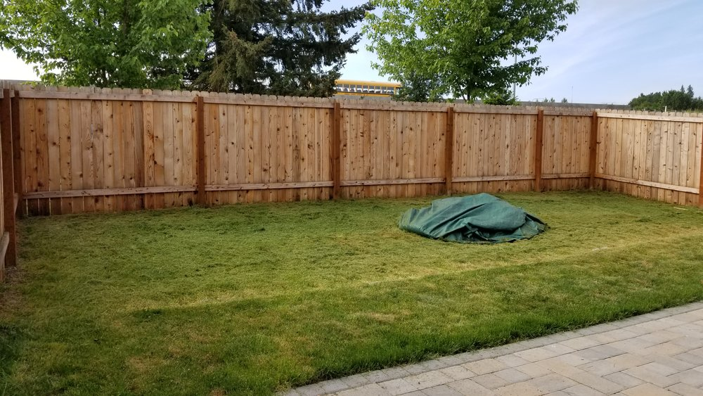 2nd Lawn Makeover BEFORE