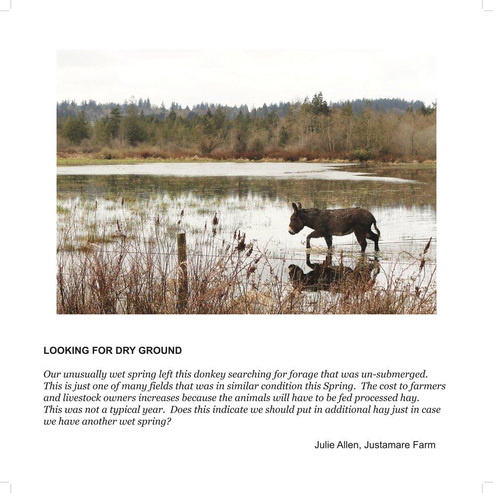 Julie Donkey bl.jpg