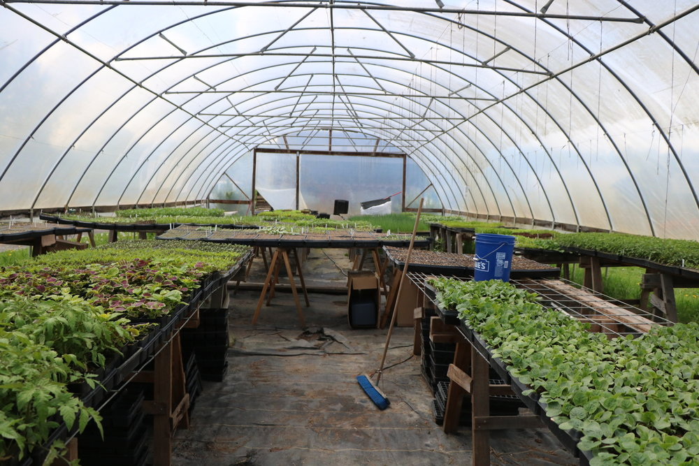 Food Bank Farm's greenhouse packed full with starts waiting to be planted.