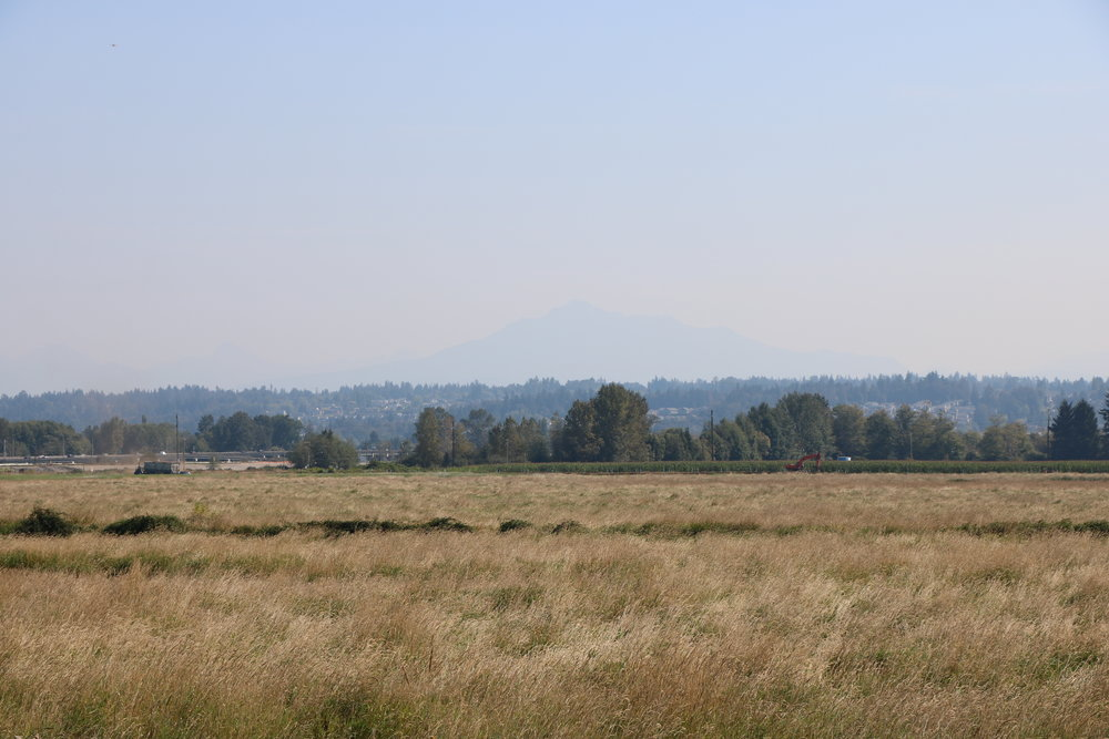 Farmland on Ebey Island with Mount Pilchuck in the background (hazy day)