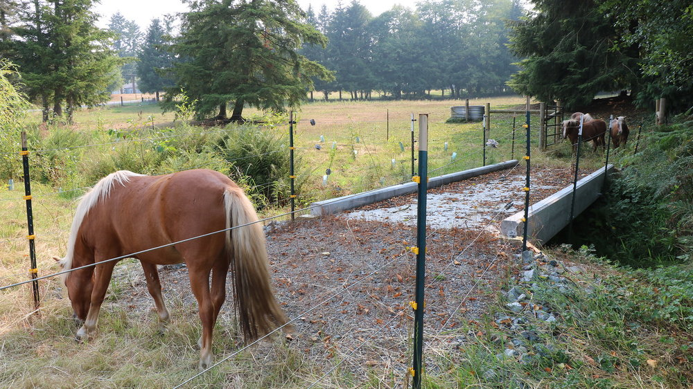 Exclusion fencing and a livestock bridge