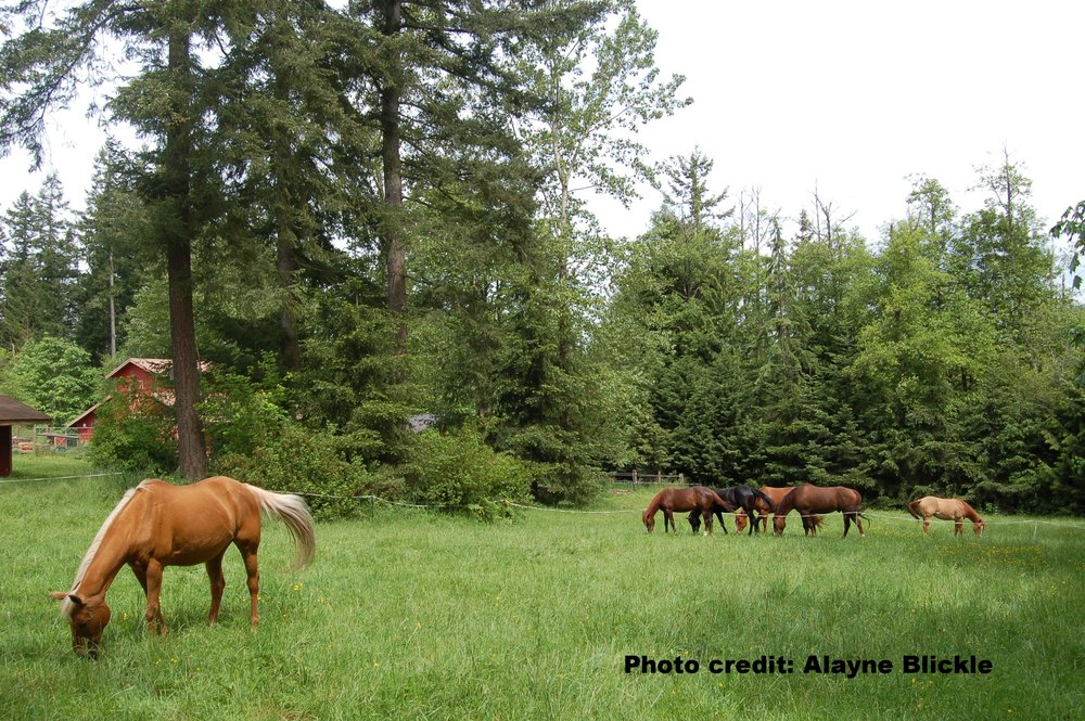 rotational grazing with wildlife enhancement in center.jpg