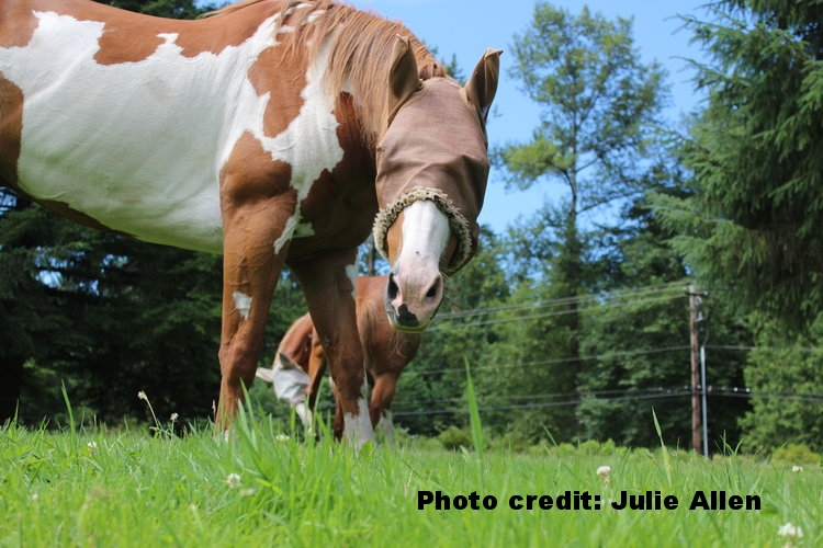 IMG_4868_Horse-w-Cover.jpg