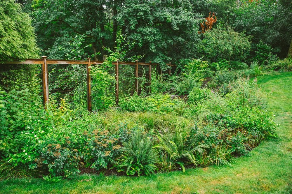 Photo of lush backyard habitat with wooden fence visible underneath greenery.