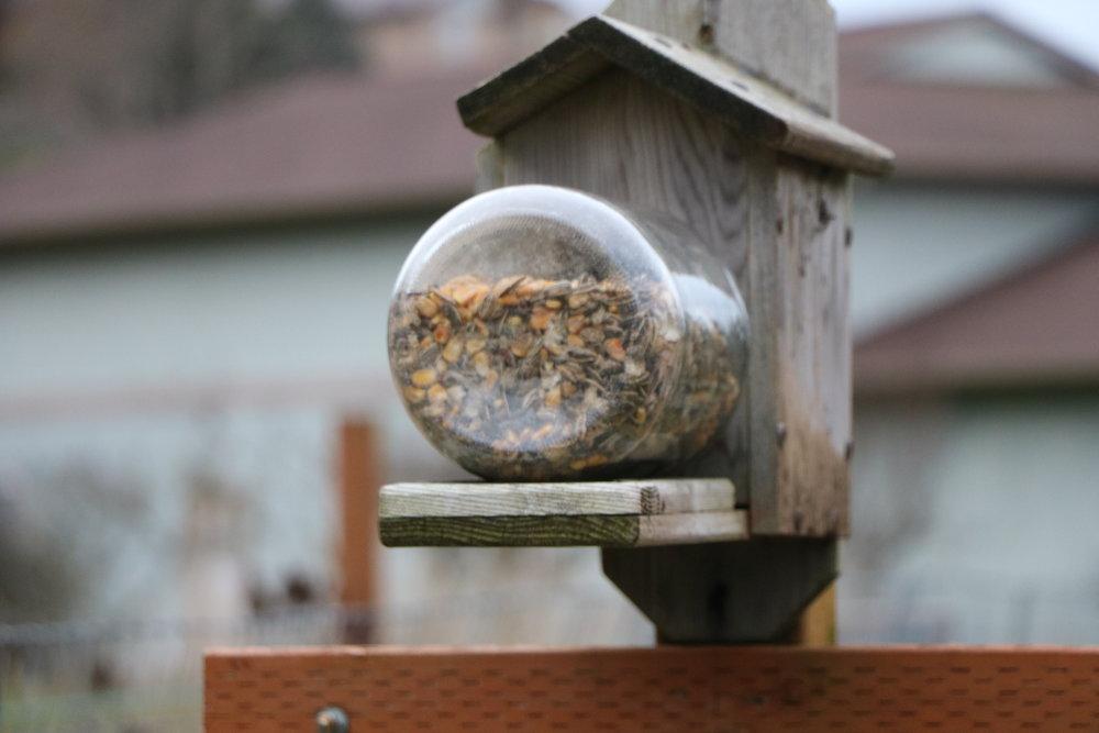 Squirrel feeder