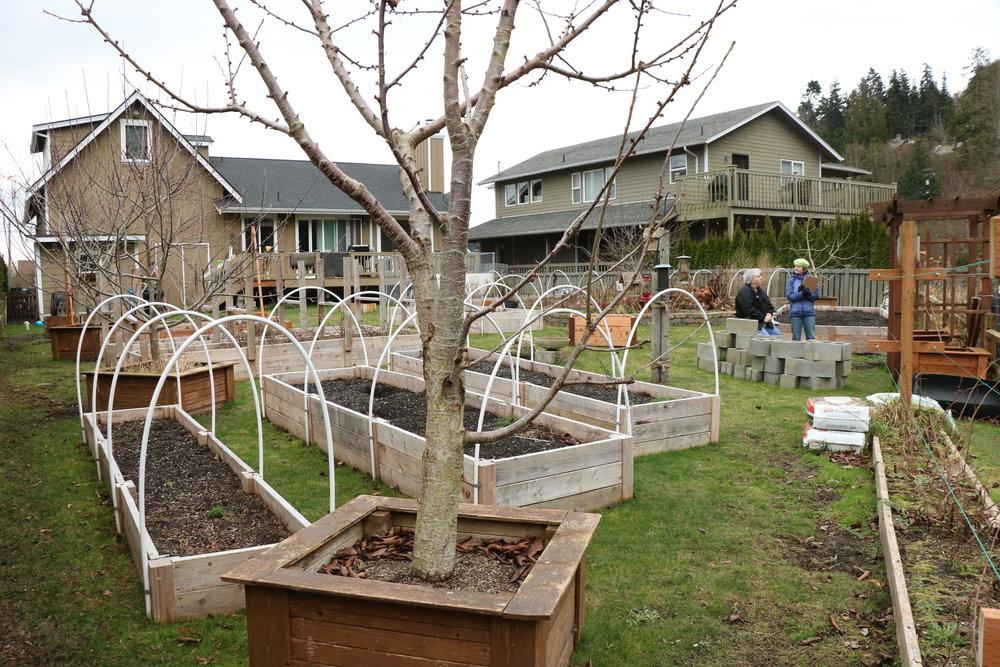 Her Lawns to Lettuce Garden