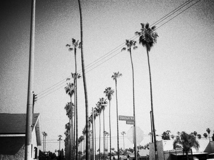 4_hood-palmtrees-off-slauson.jpg