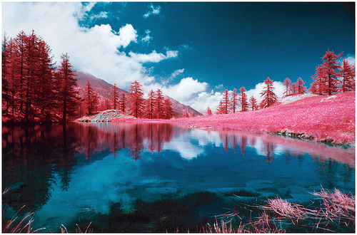 gorgeous!    photojojo :     Color infrared film: 1 part film, 1 part magic.    (Photo by  infracolor™ on Flickr )