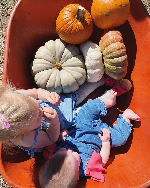 pumpkin patchin' it up 🎃  #ladyjosi #emmareesejosi