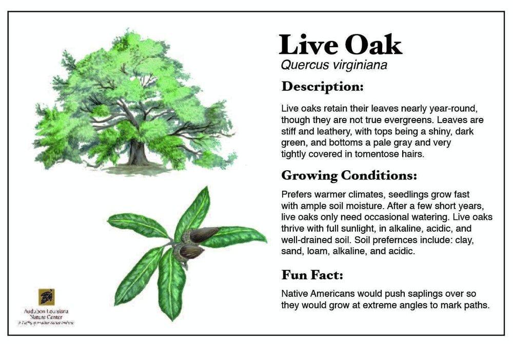 Plant ID Card