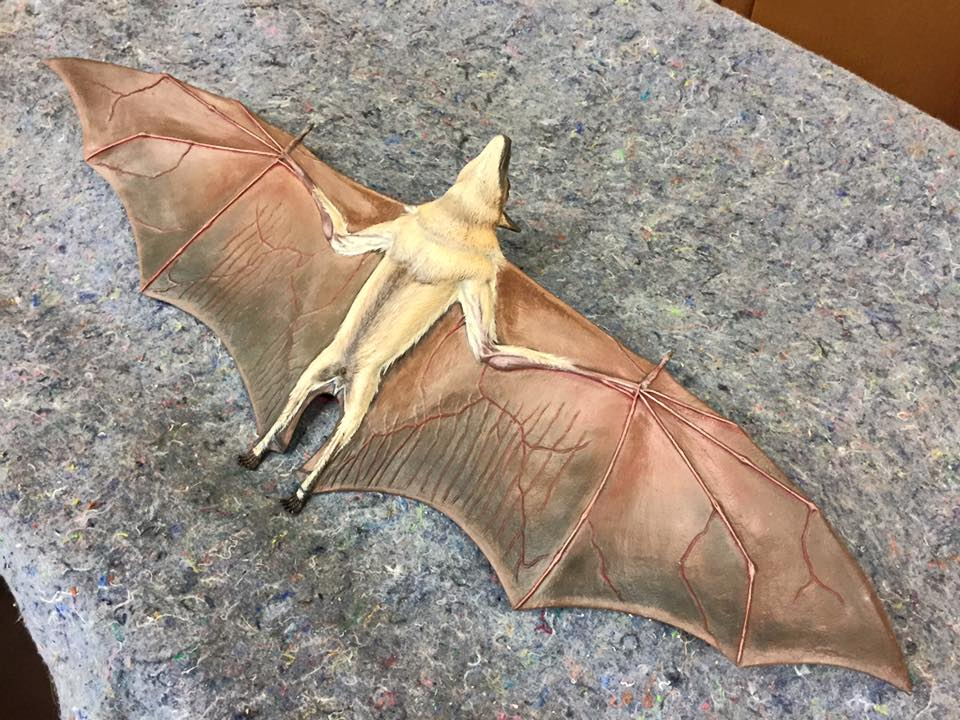 Straw Colored Bat