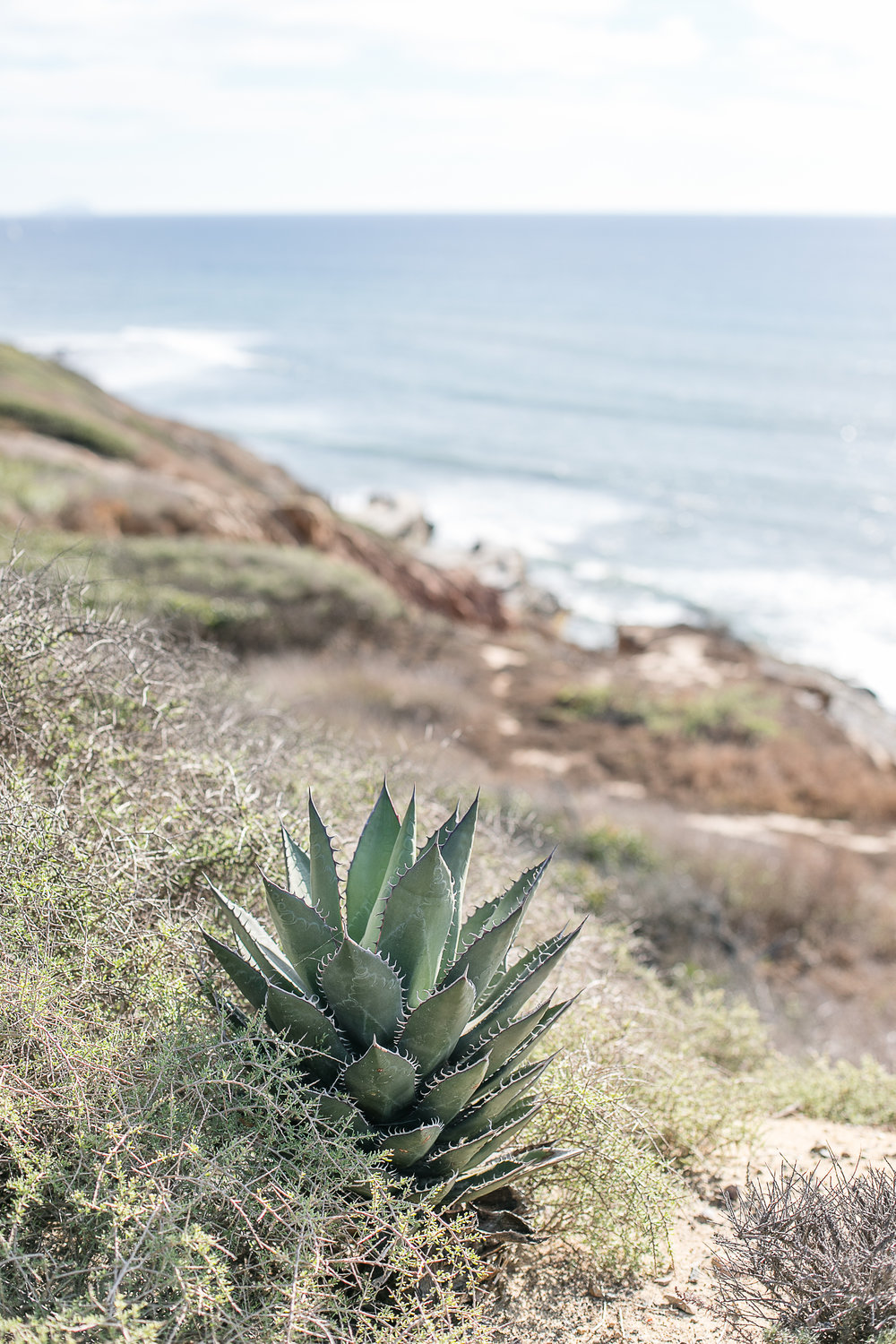 Amanda and Josh's engagement session Cabrillo National Monument and tide pools-4.jpg