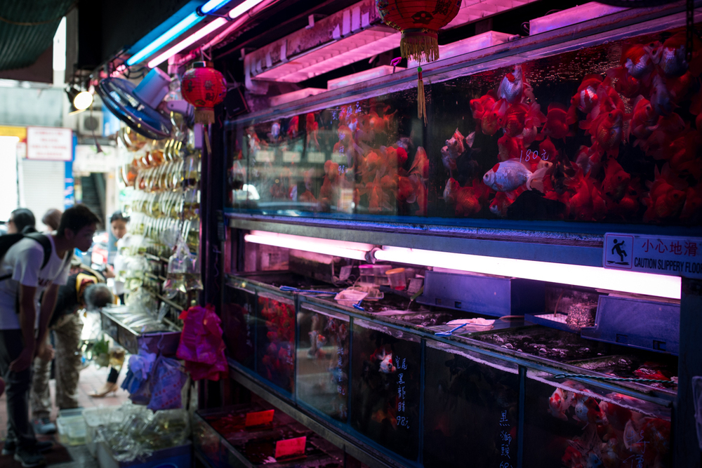 Interior of a shop selling goldfish, guppies, and aquatic plants
