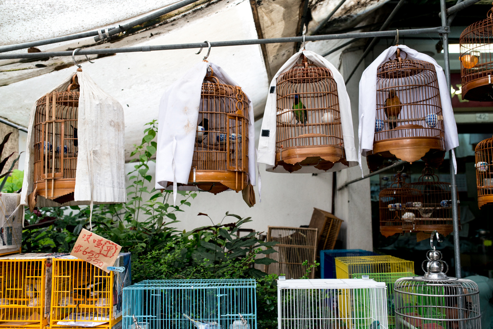 Birds and cages for sale in the Yuen Po Garden