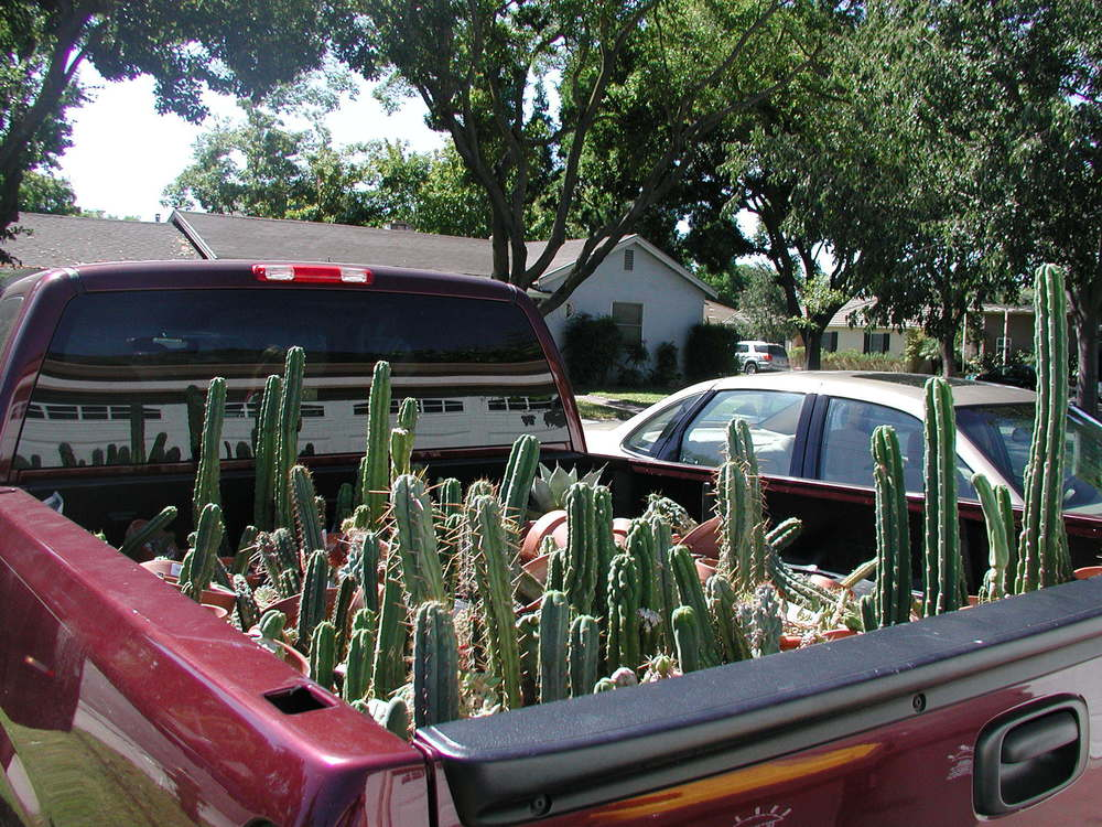 How many different cactuses can you make out?
