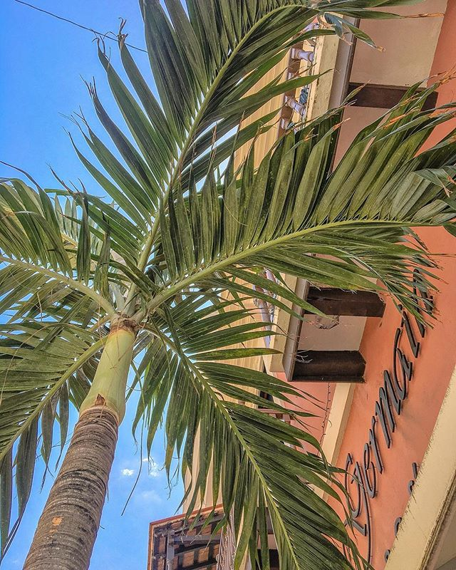 I am just so in love with the palette in paradise 🎨🌴💕 #puertorico . . #photography #photooftheday #photooftheday #sanjuan #oldsanjuan #condadovanderbilt #tropical #caribbean #puertorico #oldsanjuan #instagood #getaway #puertorican #whateverpuertorico #history #palmtree #luxury #architecture #architecturephotography #photographer #artist #island #travelphotography #realestate #interiordesign #wanderlust #travel #travelblogger  #lifestyleblogger  #picoftheday #viejosanjuan #puertorico🇵🇷