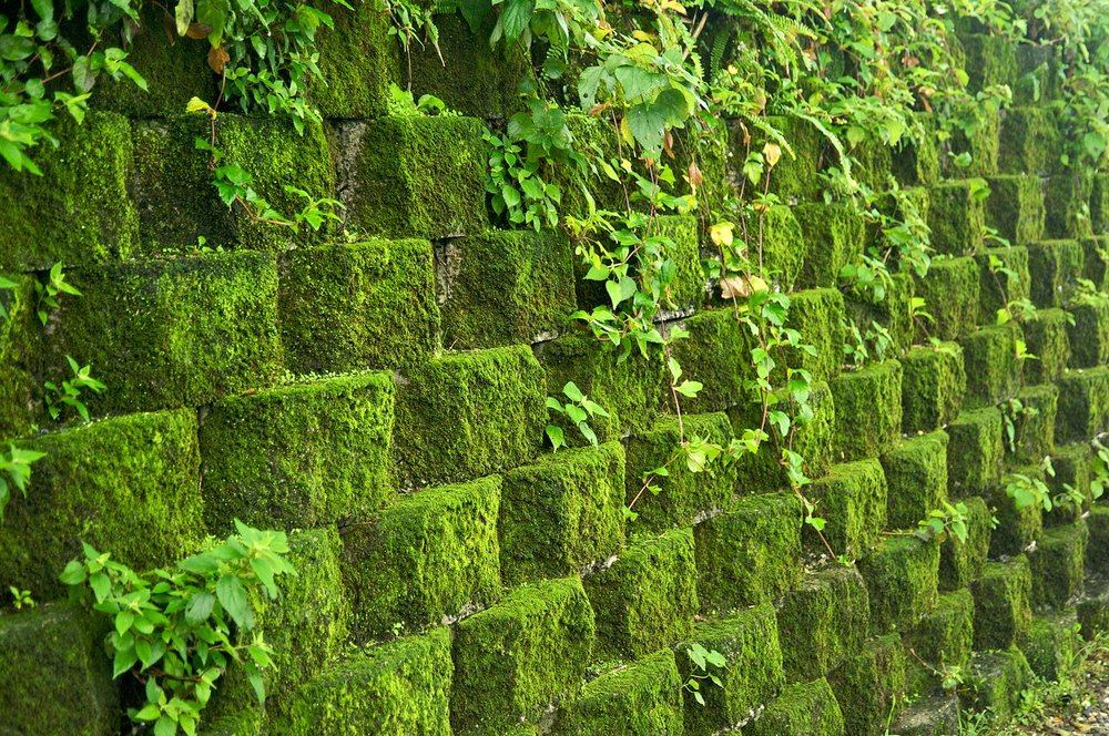 Taiwan_2009_JinGuaShi_Historic_Gold_Mine_Moss_Covered_Retaining_Wall_FRD_8940.jpg