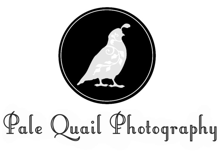 Wedding and Portrait Photography Olympia, Washington | Pale Quail Photography