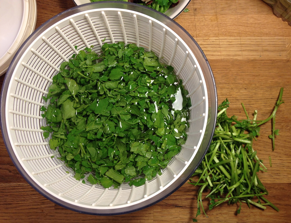 You need to pull the leaves and discard the stems for watercress.