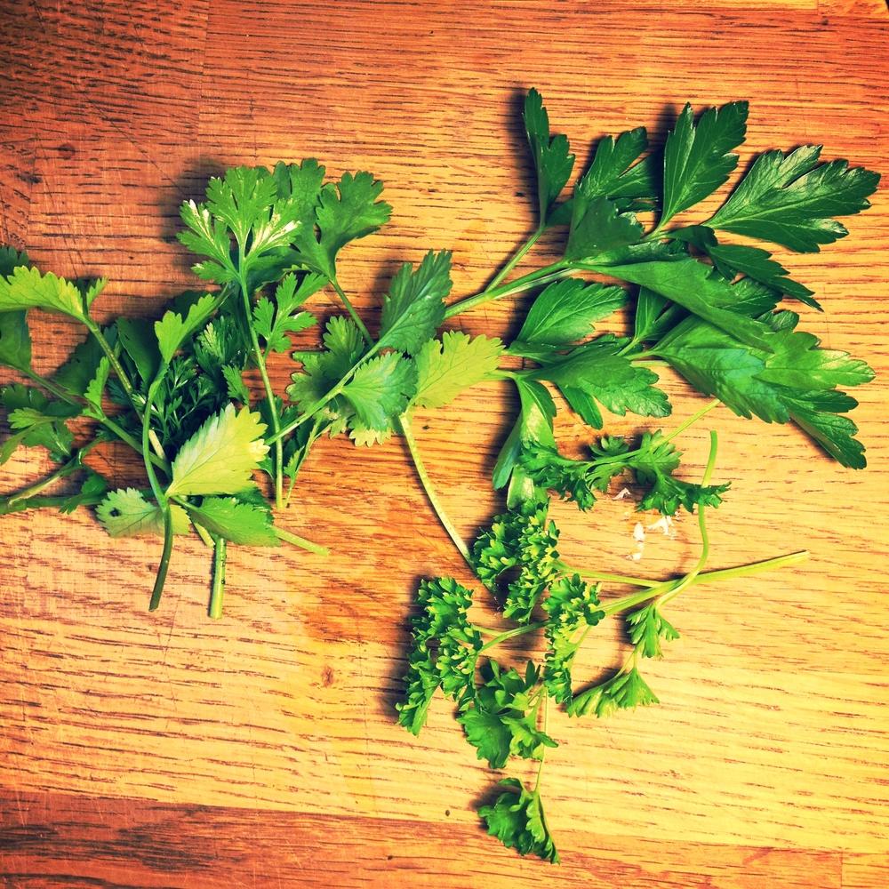 cilantro parsley parsley