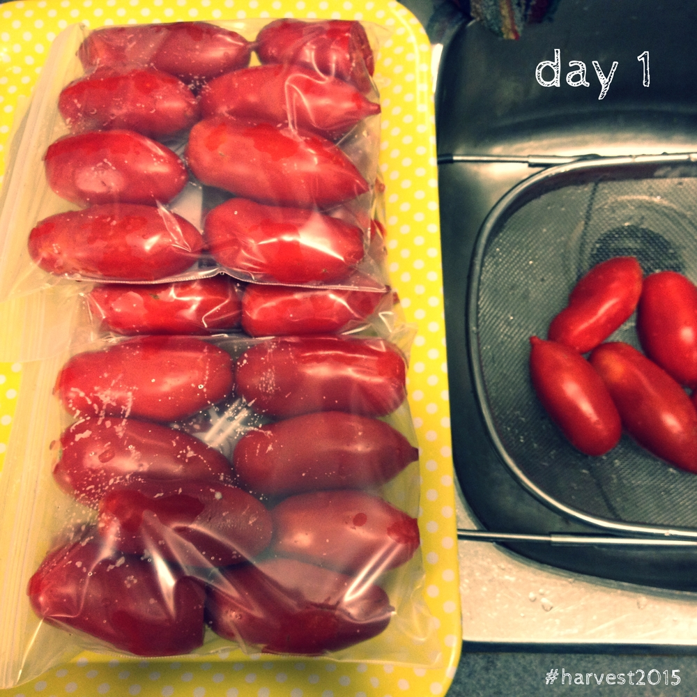 Freezing romas in plastic freezer bags means no BPA!