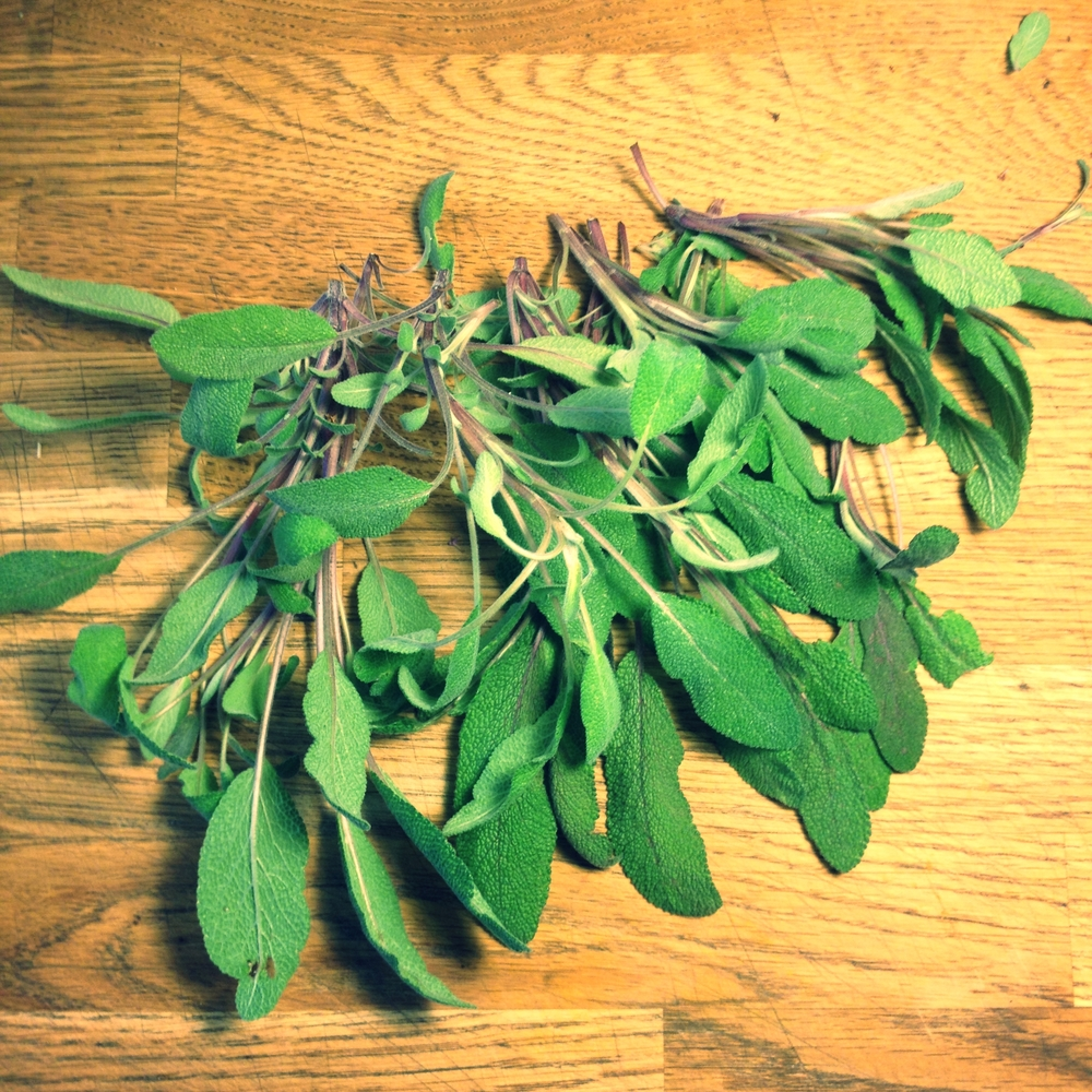 Sage from the garden. So fragrant!