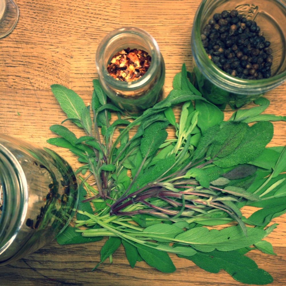 Sage, peppercorns, chili pepper, destined to infuse some red wine vinegar. #harvest2015