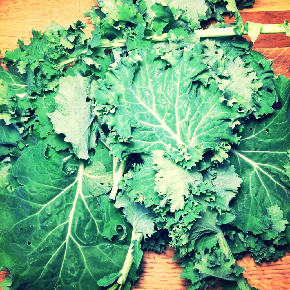 Greens Greens Greens Greens. As far as the eye can see it seems. #harvest2015 (Siberian Kale)