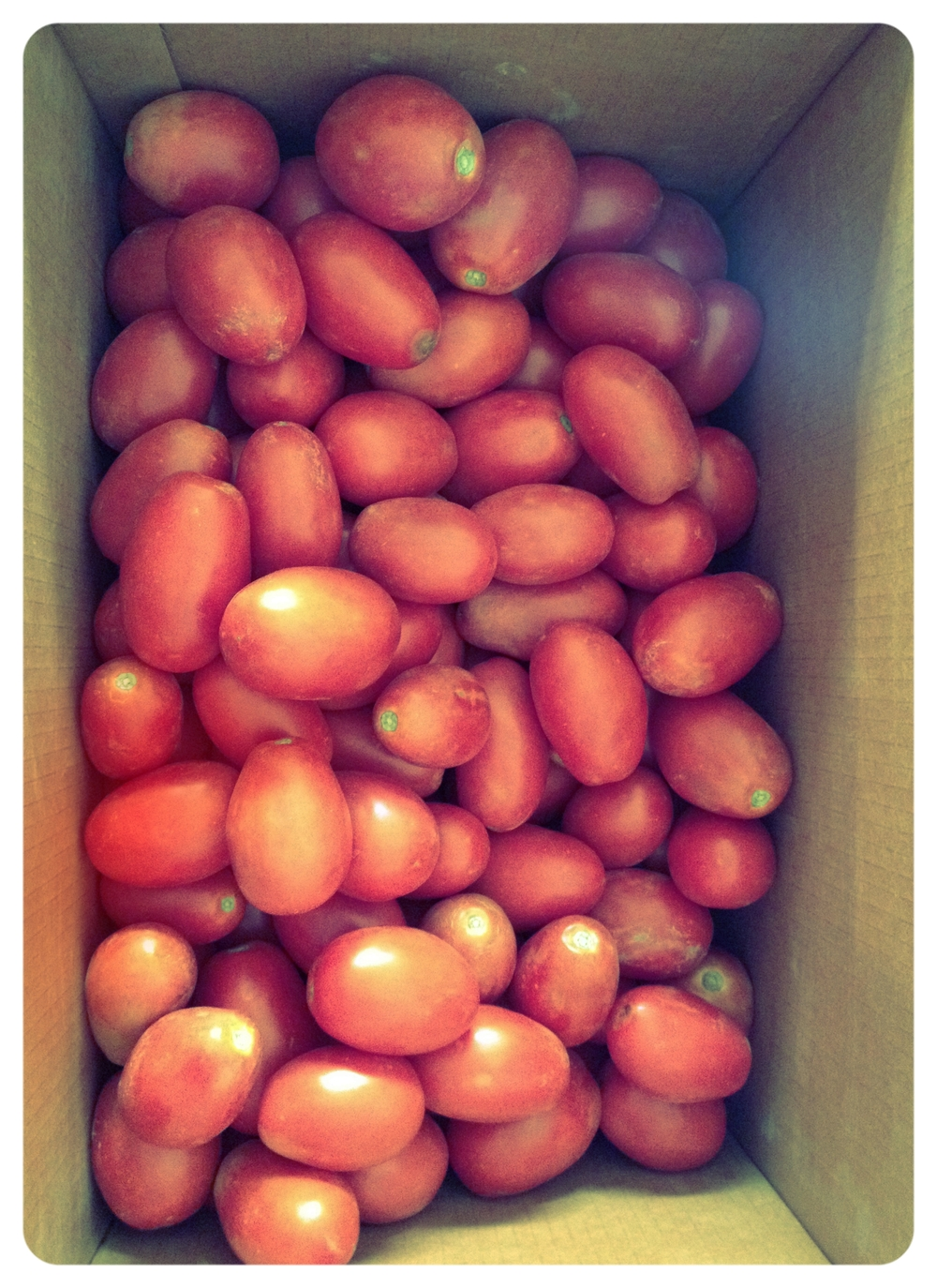 What to do, what to do. I love tomatoes. #harvest2015