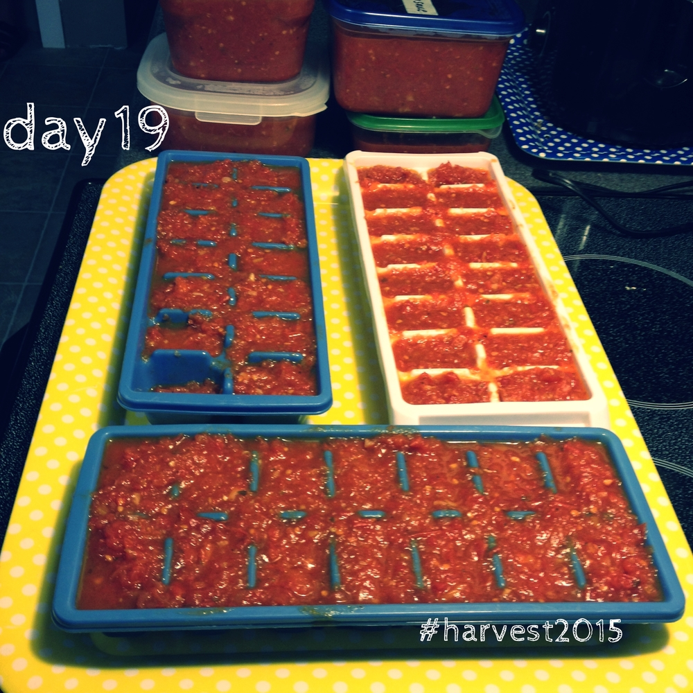 Pre-portioned pizza sauce in ice cube trays for quick-and-dirty meals later in my frazzled year. #harvest2015