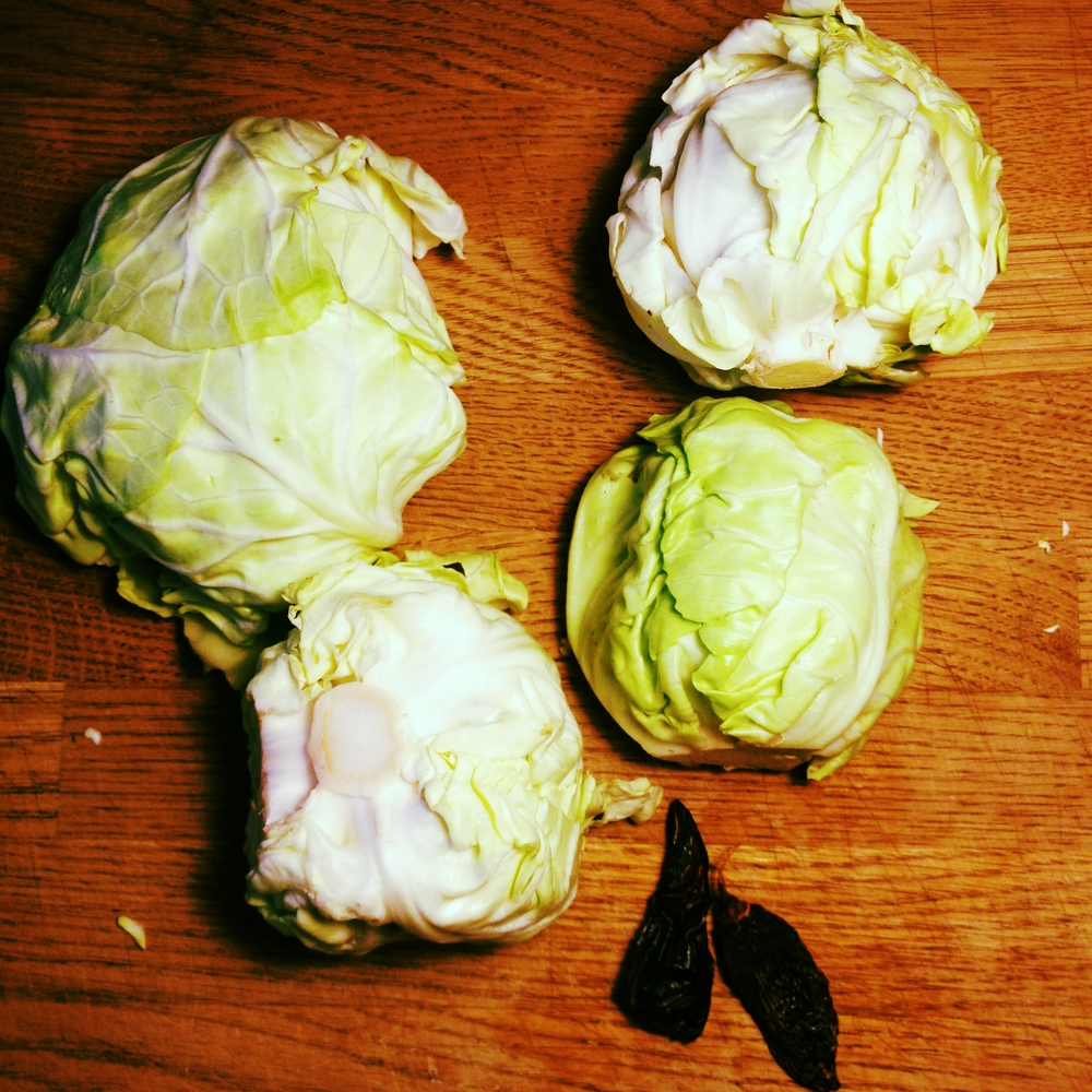 Blue Mountain Biodynamic Farm's glorious first cabbages of the season! #harvest2015