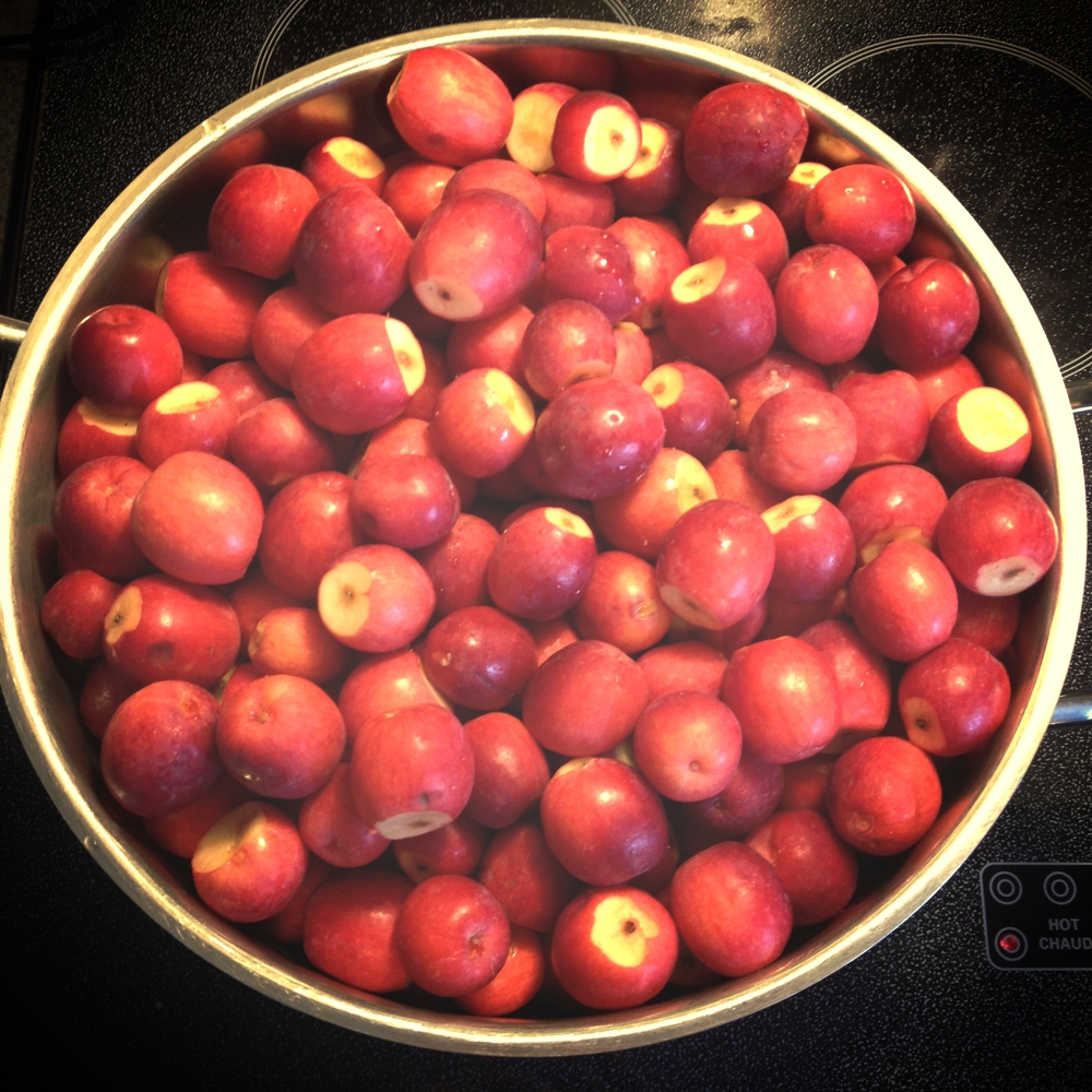 Crabapples ready to become buttery goodness. #harvest2015