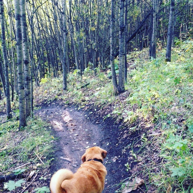 My guy Max, and one of our favourite spots in town: Paskapoo Slopes.